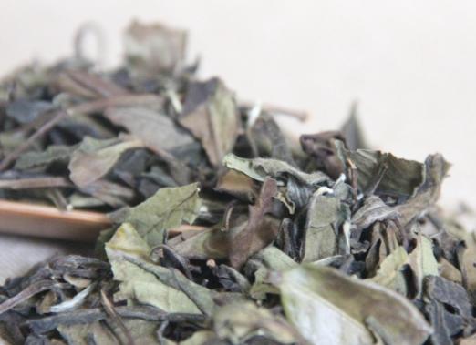 白茶保存大有讲究,南北方存在差异!图片