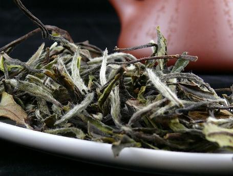 普及中国白茶知识!图片