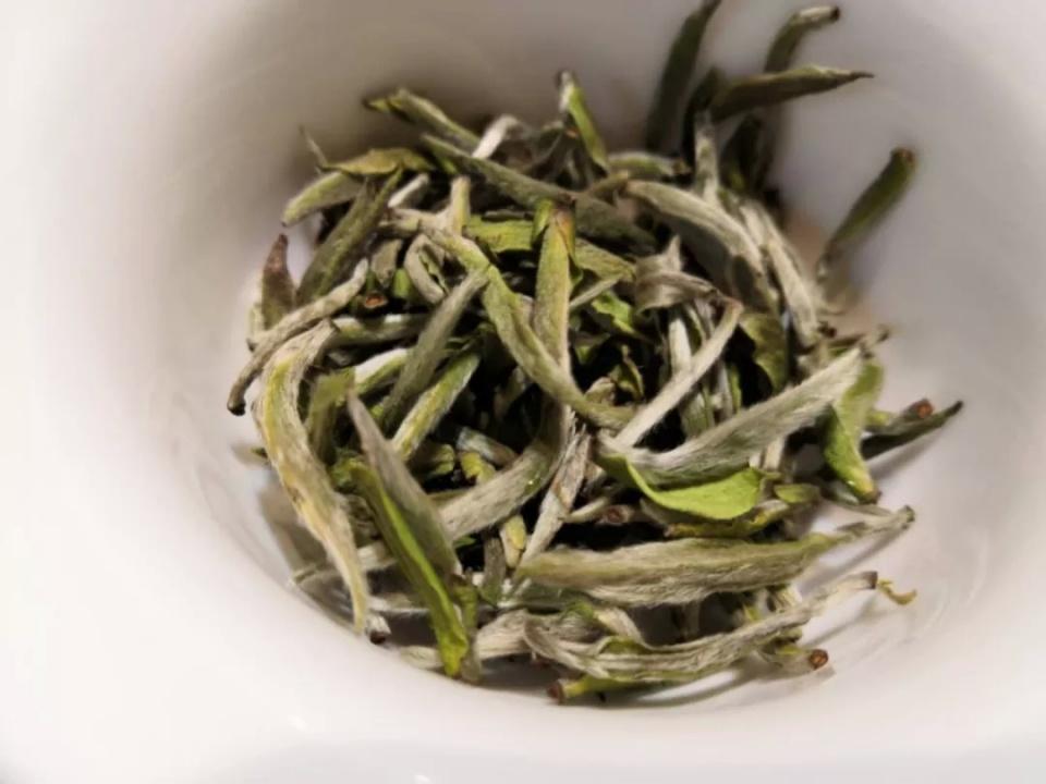 白茶叶底近似绿茶,暴露工艺中的两个问题图片