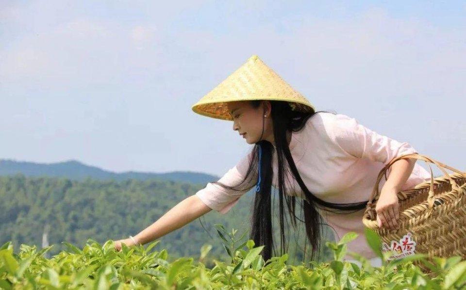 生活中常见的白茶还有哪些