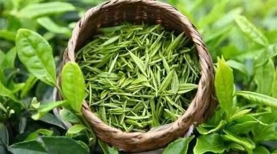 红茶,绿茶,黑茶,到底哪一种比较养生?图片