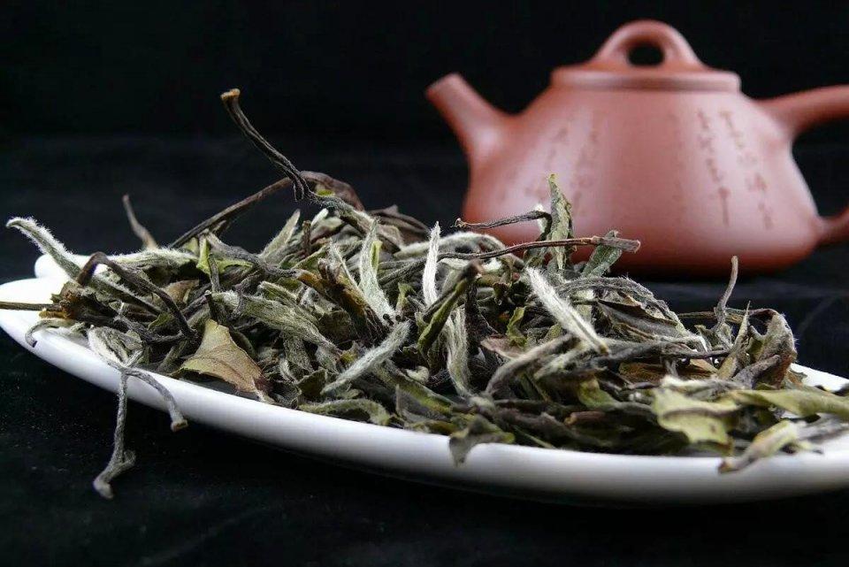 老白茶药用价值高,用什么壶煮着喝才好