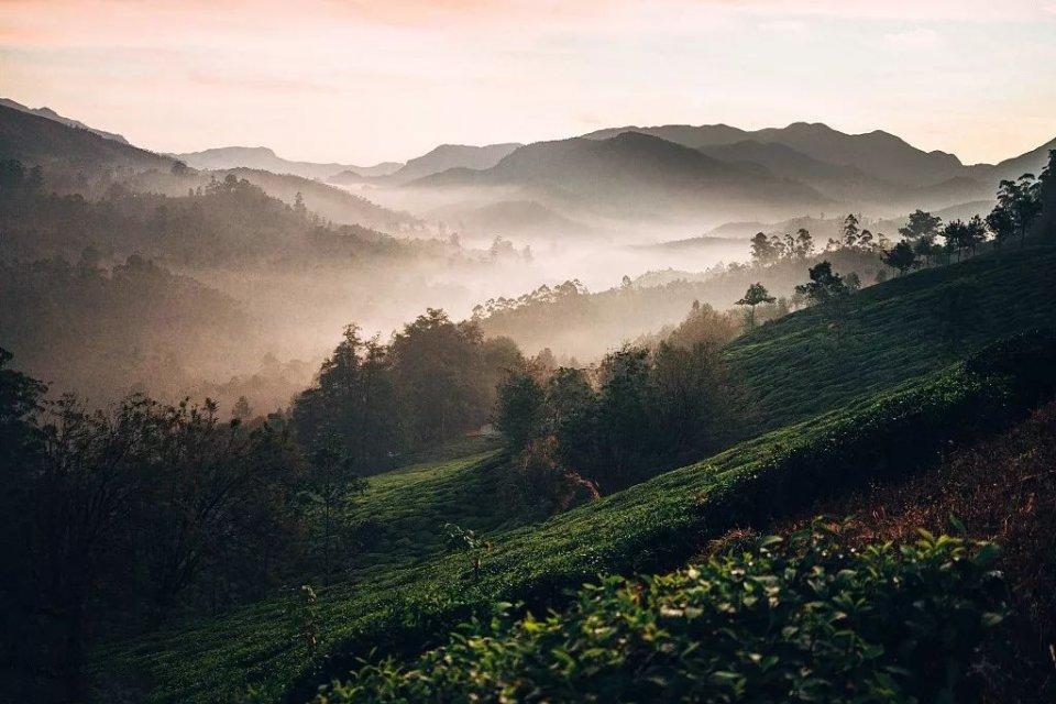 茶叶种类你知多少?图片