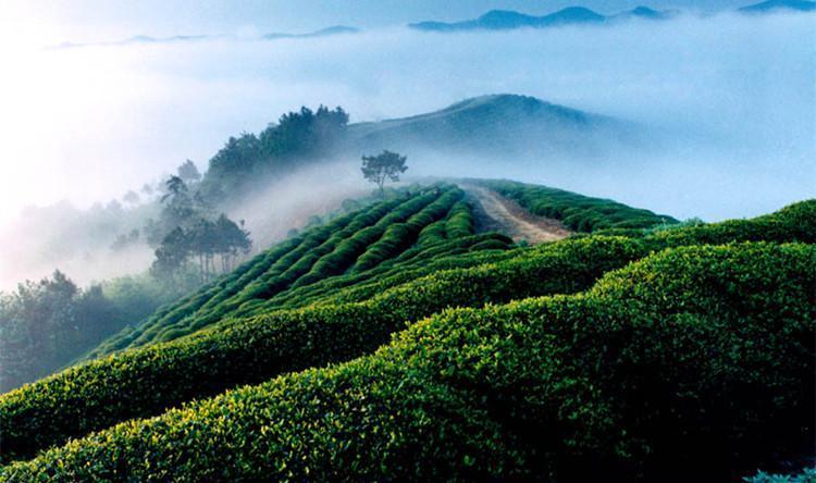 中医养生茶疗之——适合上班族的养生茶饮图片