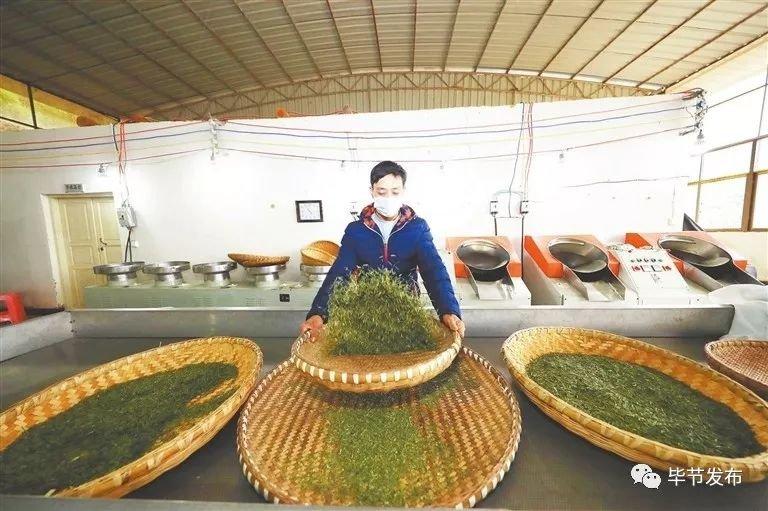 中国贡茶之乡——金沙